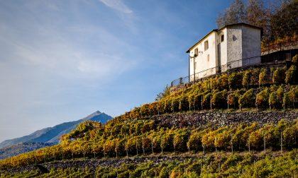 Paesaggio Rurale Storico, nuovo riconoscimento per i terrazzamenti vitati