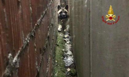 Vigili del Fuoco salvano cagnolino incastrato tra due muri