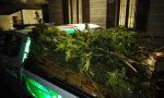 Piantagioni di marijuana sul Lago: maxi sequesto di droga