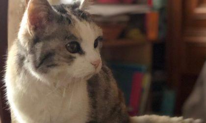 Lilli gatta da record, compie 25 anni