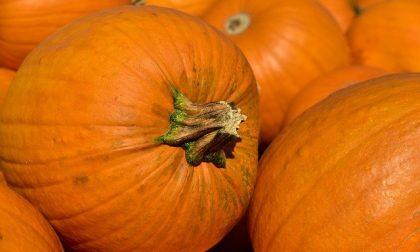"Halloween, zucca protagonista in tavola:  ""Memoria, curiosità e i consigli per prepararla"""