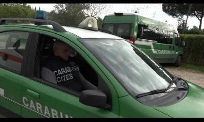 Flora e fauna a rischio di estinzione: l'impegno dei Carabinieri nel Calendario CITES 2021 VIDEO