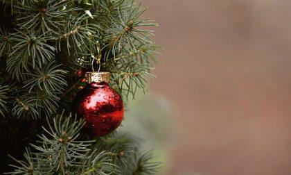 """Albero di Natale: quello """"agricolo""""  salva i terreni dall'abbandono"""