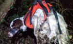 Due cani finiscono nel dirupo, soccorsi in azione