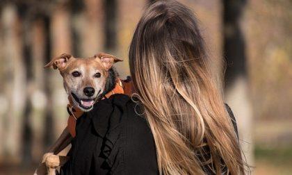 La rabbia dei sondriesi per le deiezioni canine