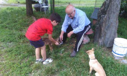 """Salvano, curano e adottano un cucciolo di capriolo, ma la """"legge"""" lo ha strappato al loro affetto"""