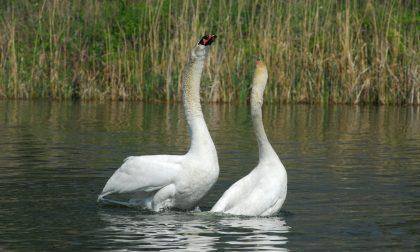 Quattro progetti scientifici per la Riserva Naturale Pian di Spagna e Lago di Mezzola