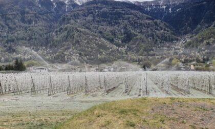 """""""Il gelo per salvare le mele dal gelo"""": le foto della lotta contro il maltempo in Valtellina"""