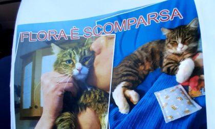 Appello per ritrovare la gatta Flora