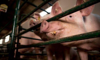 """Antibiotici in carne, latte e uova: Moratti e Rolfi rassicurano """"Nostri prodotti a prova di microscopio"""""""