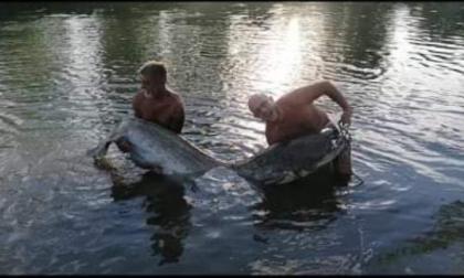 Due mostri pescati nell'Adda: sono pesci siluro