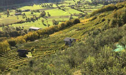 Progetto di valorizzazione della filiera della olivicoltura