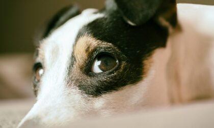 Seviziò e uccise per ripicca una cagnolina, 39enne finisce in carcere