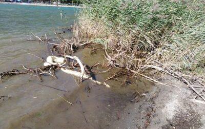 Pitone di quattro metri ritrovato in spiaggia